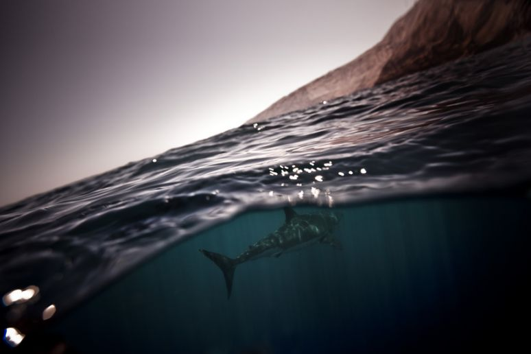 Michael Muller Photo Journalism Underwater Photography